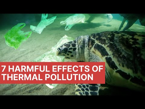 7 Harmful Effects Of Thermal Pollution