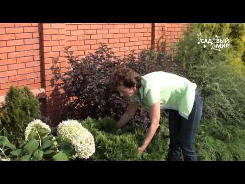 видео: Советы по обрезке кустаников. Сайт