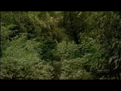 IMAX   Tropical Rainforest
