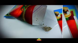 видео томат белый налив
