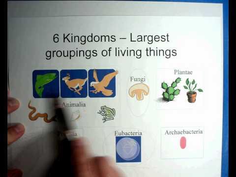 Biology #9 - Part 1 - Taxonomy of Organisms.wmv