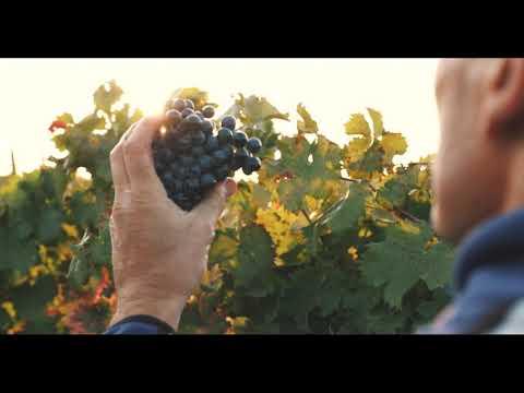 Agri Segretum Harvest by Vitis Vin