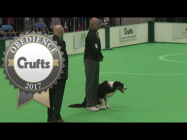 Obedience Championship - Dogs - Scent - Part 1 | Crufts 2017