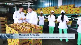 Как выращивают огурцы и томаты в Черкесске.  Сделано в России РБК