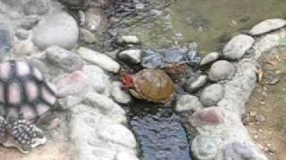 Tecumseh Takes a Dip