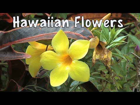 Flowers of Hawaii : A Visual Documentary -  Stunning Tropica