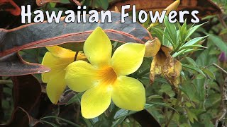 Flowers of Hawaii : A Visual Documentary -  Stunning Tropical Plants and Flowers of Hawaii