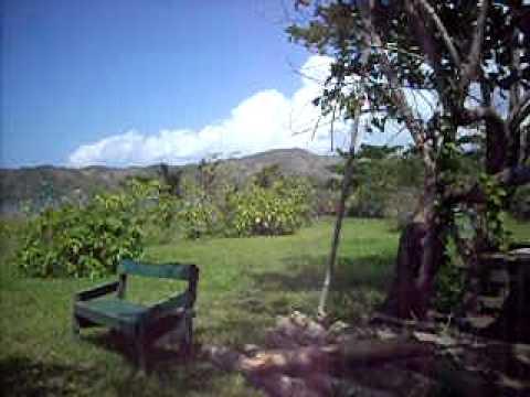 Vital Ital Lucea Hanover Jamaica Ray's Back Yard