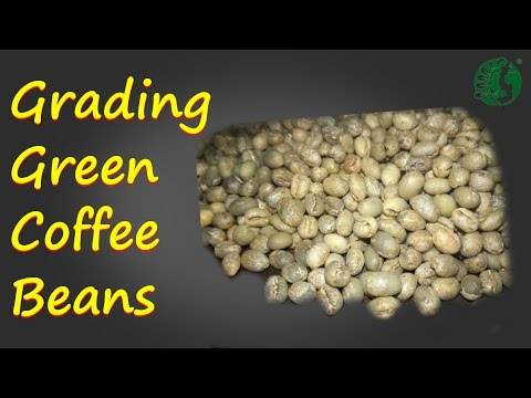 Grading Green Coffee Beans Ep1  ECHO Asia Coffee Processing Camp 2016