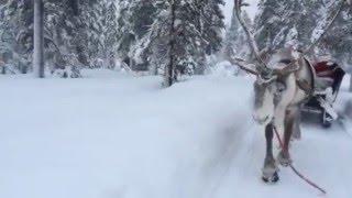 北欧Finland 観光地であるサーリセルカ トナカイそりツアーで見た銀世界.