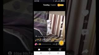 Funny cat 2019 new vedio