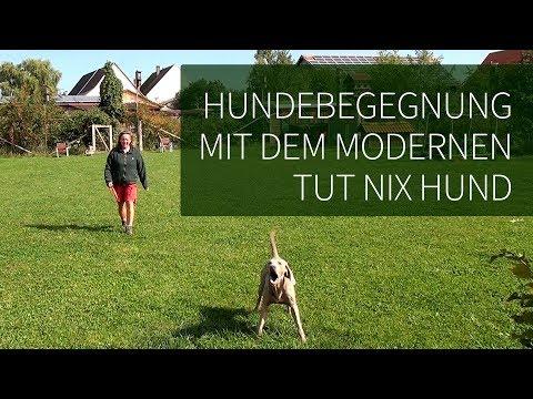 Hundebegegnungen ► Der tut nix Hund !