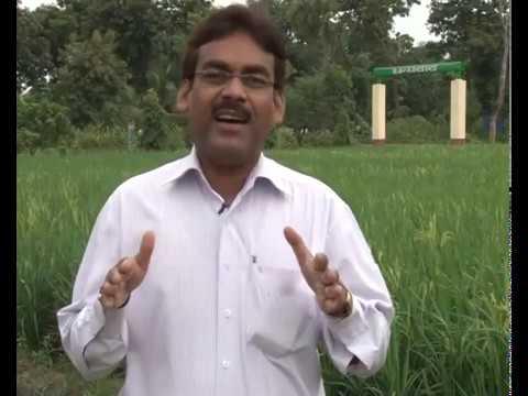SRI vidhi se dhan ki kheti bhag - 1 mp4