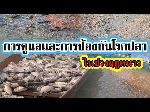 การดูแลและการป้องกันโรคปลา | ในช่วงฤดูหนาว |