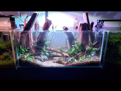 Forest Stream Planted Aquarium Tank Setup