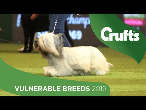 Vulnerable Breeds Competition | Crufts 2019