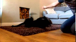 Dog Training Roll Over Trick
