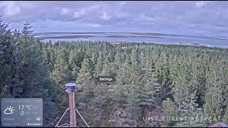 Preview of stream Live webcam from Uist Forest Retreat
