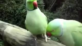 Говорячие попугаи прикол 2016