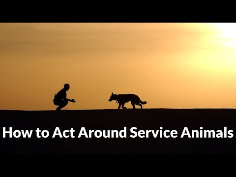 How to Act Around Service Dogs