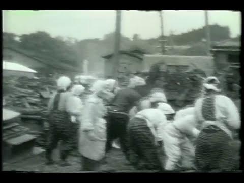 津波がくるぞお(1960年チリ地震津波)