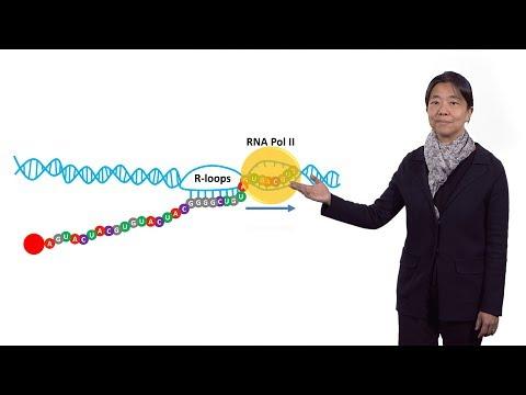 Vivian Cheung (U. Michigan / HHMI) 3: Mechanisms that underlie RNA editing and RNA-DNA differences
