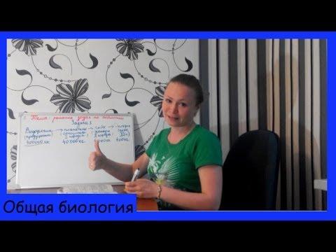 Урок биологии №15. Задачи на экологическую пирамиду (цепи питания).