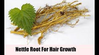 Nettle Root - Hormonal Tonic For Men & Women, Hair Loss, Prostate, Libido, Anti-Allergy/Inflammatory