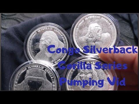 Congo Silverback Gorilla Series Pumping Vid