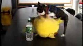 pikacho doing it doggie style :)