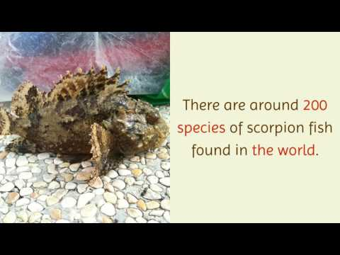13 Amazing Facts You Should Know About Scorpion Fish
