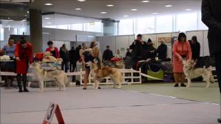 "International Dog Show ""lithuanian Winner' 2015"", Siberian Husky"