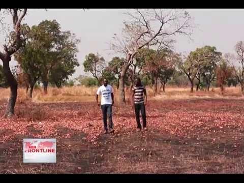 THE SHEA TREE, THE HOPE OF NORTHERN GHANA