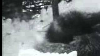 волкодав убивает волков