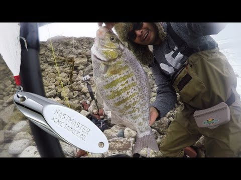 Huge Kastmasters Catch HUGE Surfperch! | Back-to-Back PB Barred and Unbarred Released