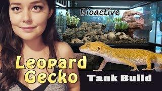 Leopard Gecko Tank Setup | Bioactive Terrarium