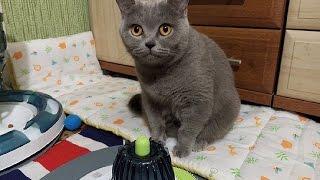 Meizu MX4 Smartphone Video test - Смешная кошка ест кошачью мяту)) Cat vs catnip Toy =)
