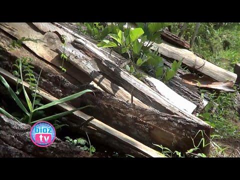 3-tersangka-illegal-loging-pohon-pinus-perhutani-trenggalek-diduga-lari-ke-luar-pulau---bioztv.id