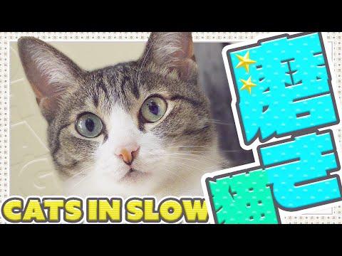 ゆっくり磨き猫