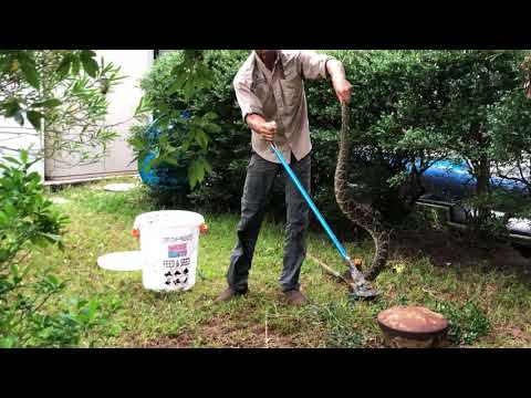 5 Foot Diamondback Rattlesnake Removal from under a house in Orange Park Florida!