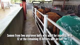 Farmer writes: heifer breeding didn't go to plan
