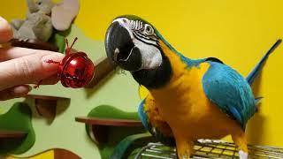 Попугай ара и колокольчик