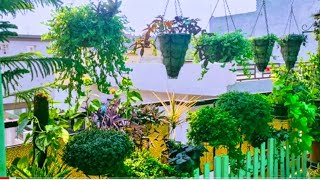 Hanging garden ll  hanging baskets ll healthy bushy plant without any chemical fertilizers  ll