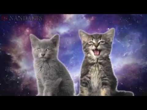 Kolaborasi Kucing Bernyanyi