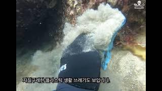 시셰퍼드 코리아 2021 첫 수중청소, 양양 남애리