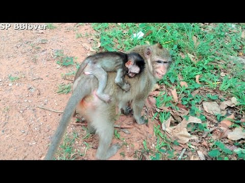 Nature Live Vivi Ep 34 - Baby Monkey Cling Mom All Time