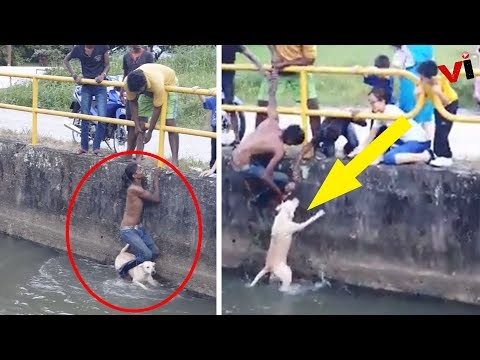 Watch As A Man Jumps Into A Dangerous Canal To Save A Drowning Dog