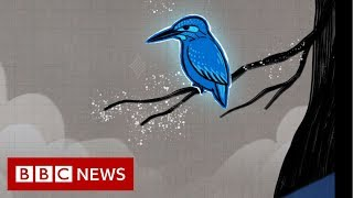 How a kingfisher helped reshape Japan's bullet train - BBC News
