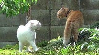 はじめて見たとらの取っ組み合いの喧嘩でした。ほんの数秒でしたが、い...