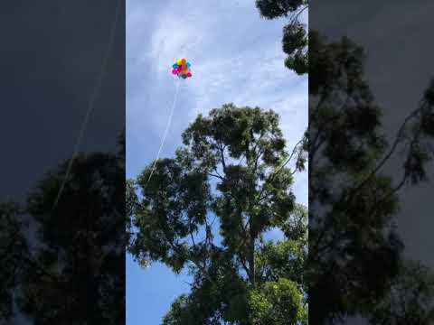 How To Retrieve My Drone Stuck High Up In A Tree Using Balloons: Failed Experiment